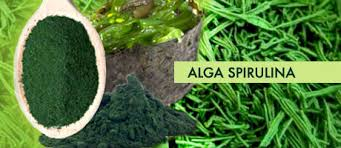 espirulina alga