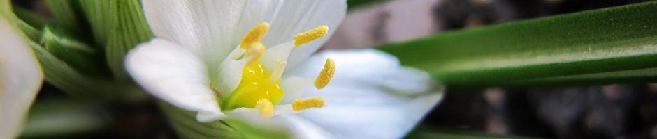 flores-de-bach-granada